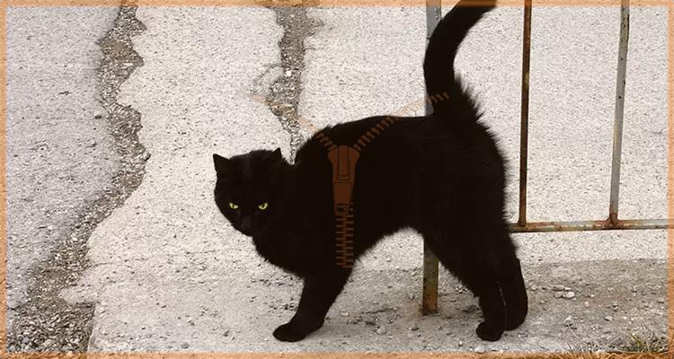 айлурофобия боязнь кошек