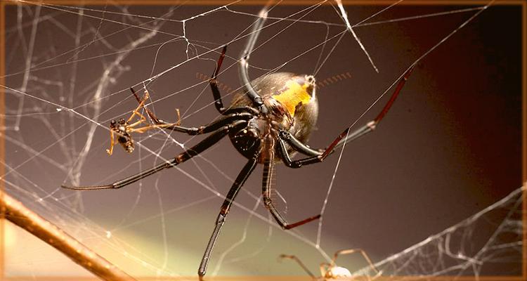 как не бояться пауков